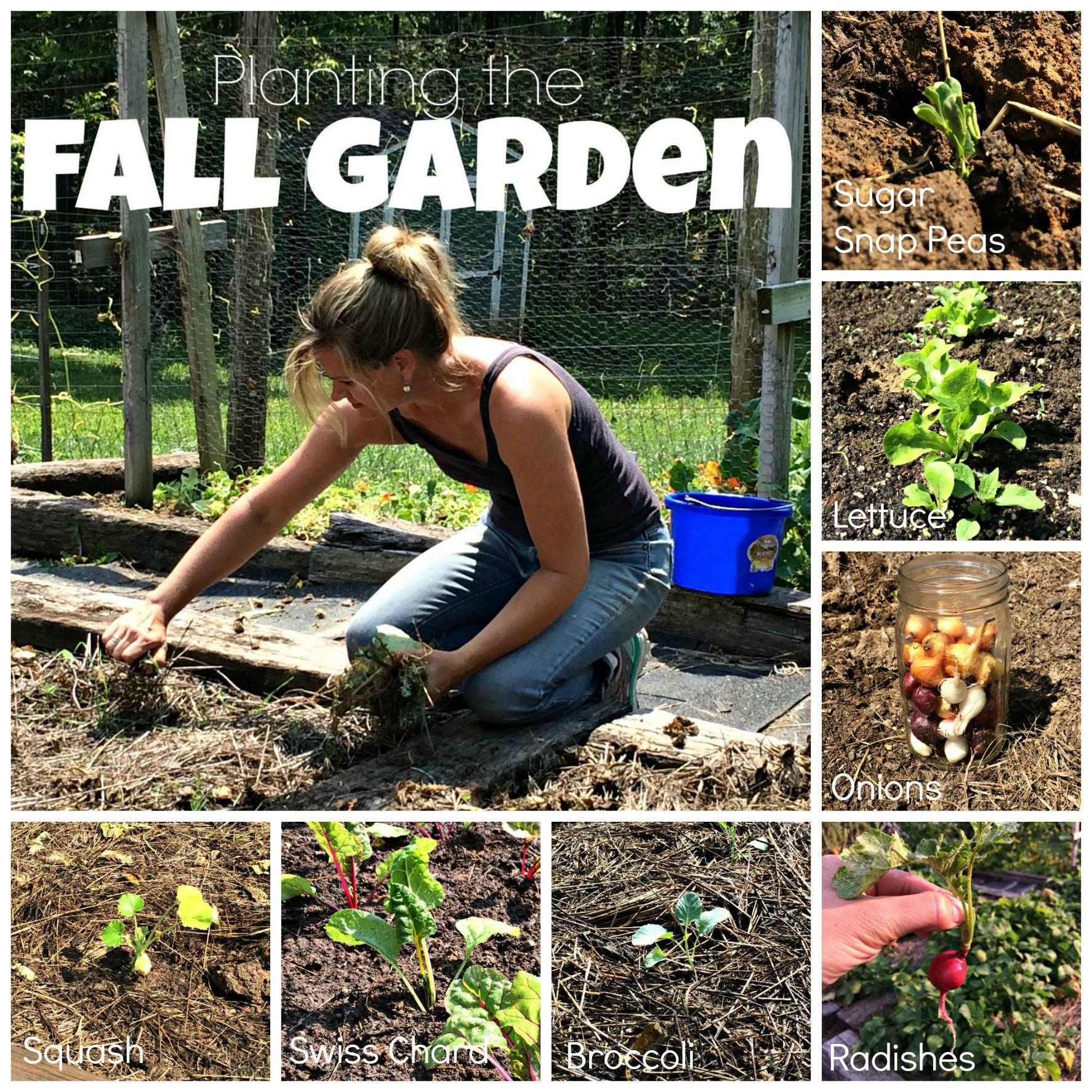 planting the fall garden joy - Garden Joy