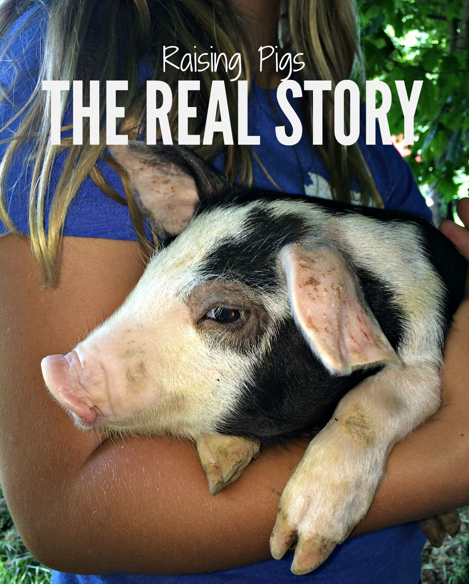 Raising Pigs – The Real Story – Farm Fresh For Life – Real