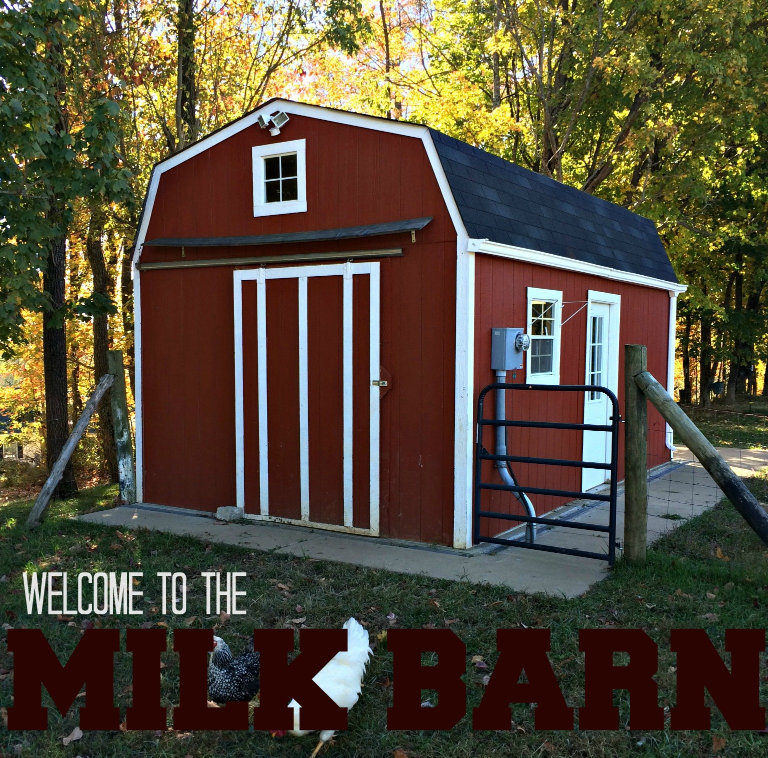 How To Build A Milk Barn You And Your Cow Will Love A