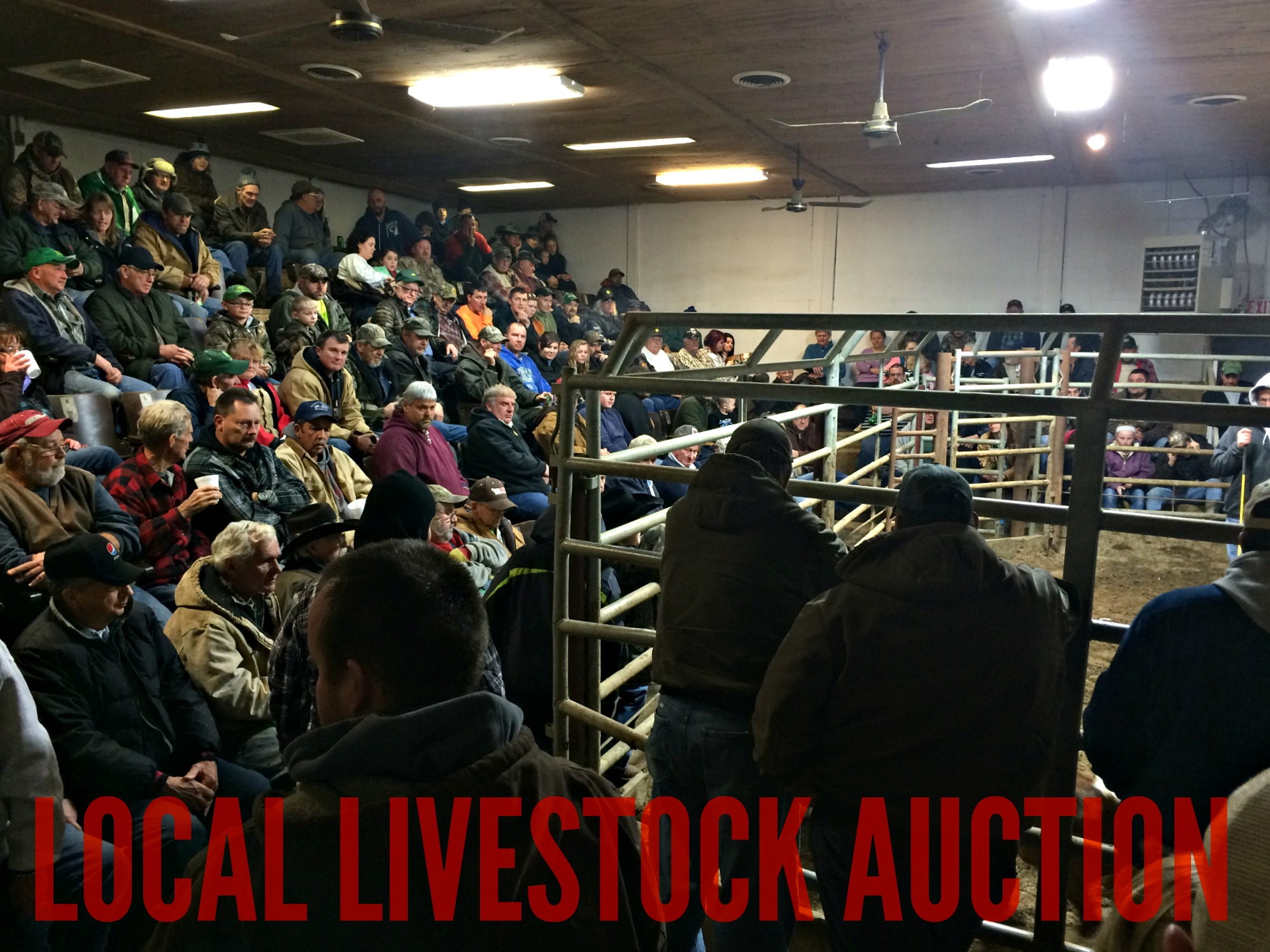 6 Reasons to Go to the Sale Barn & 1 Reason Not to – Farm