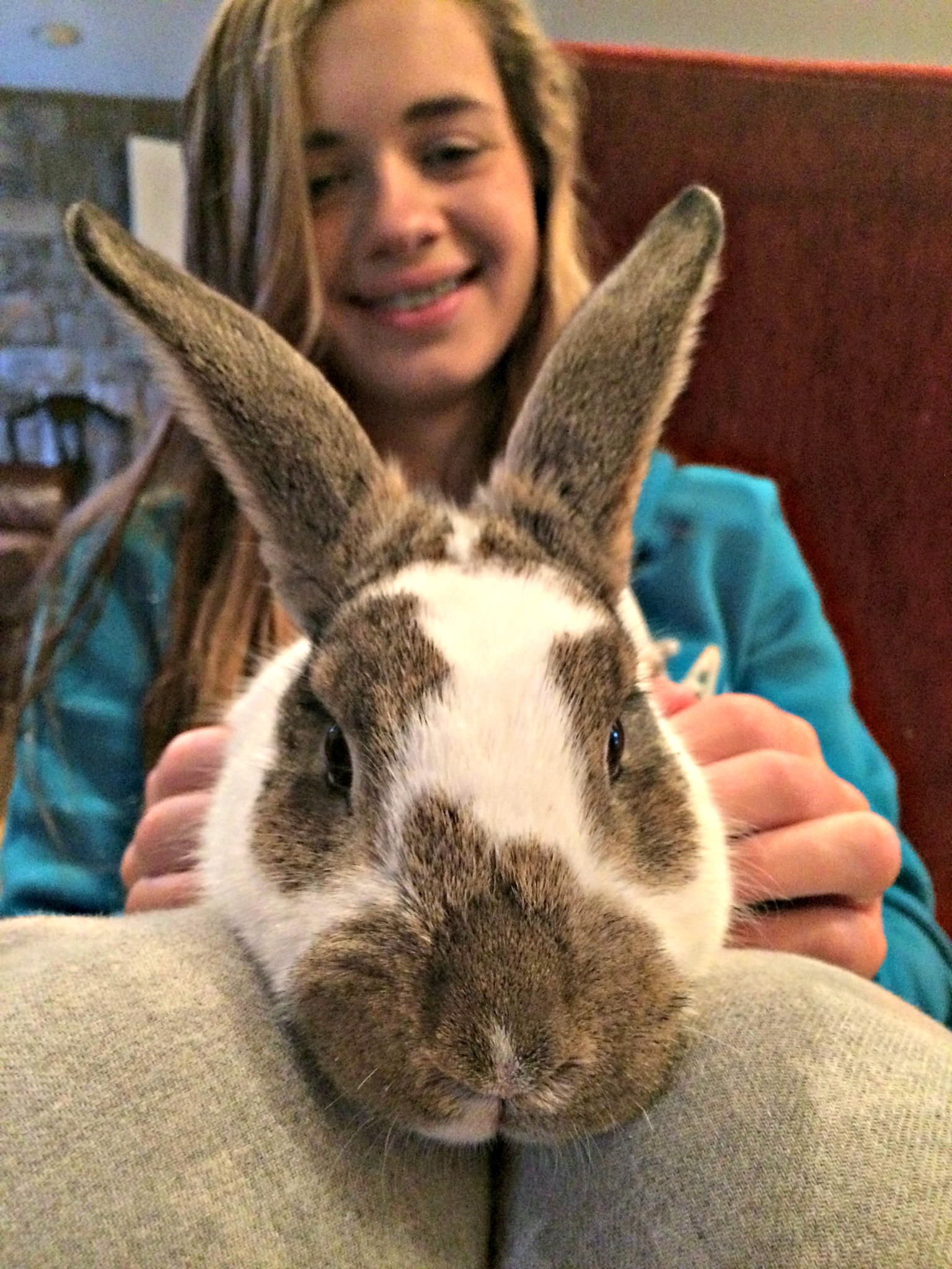 How to Keep Outdoor Rabbits Safe – Farm Fresh For Life – Real Food ...