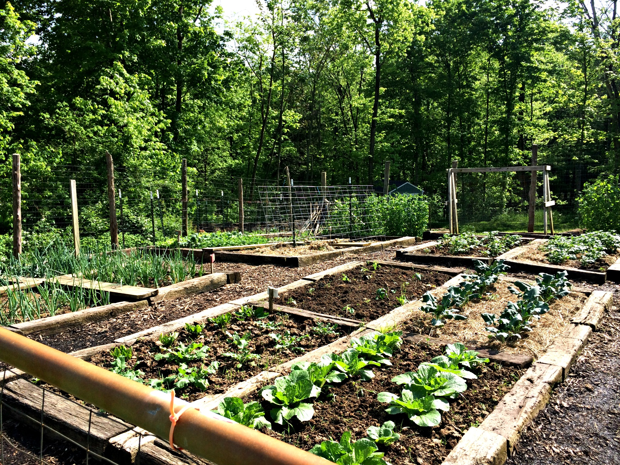 Benefits Of Raised Garden Beds Farm Fresh For Life Real Food
