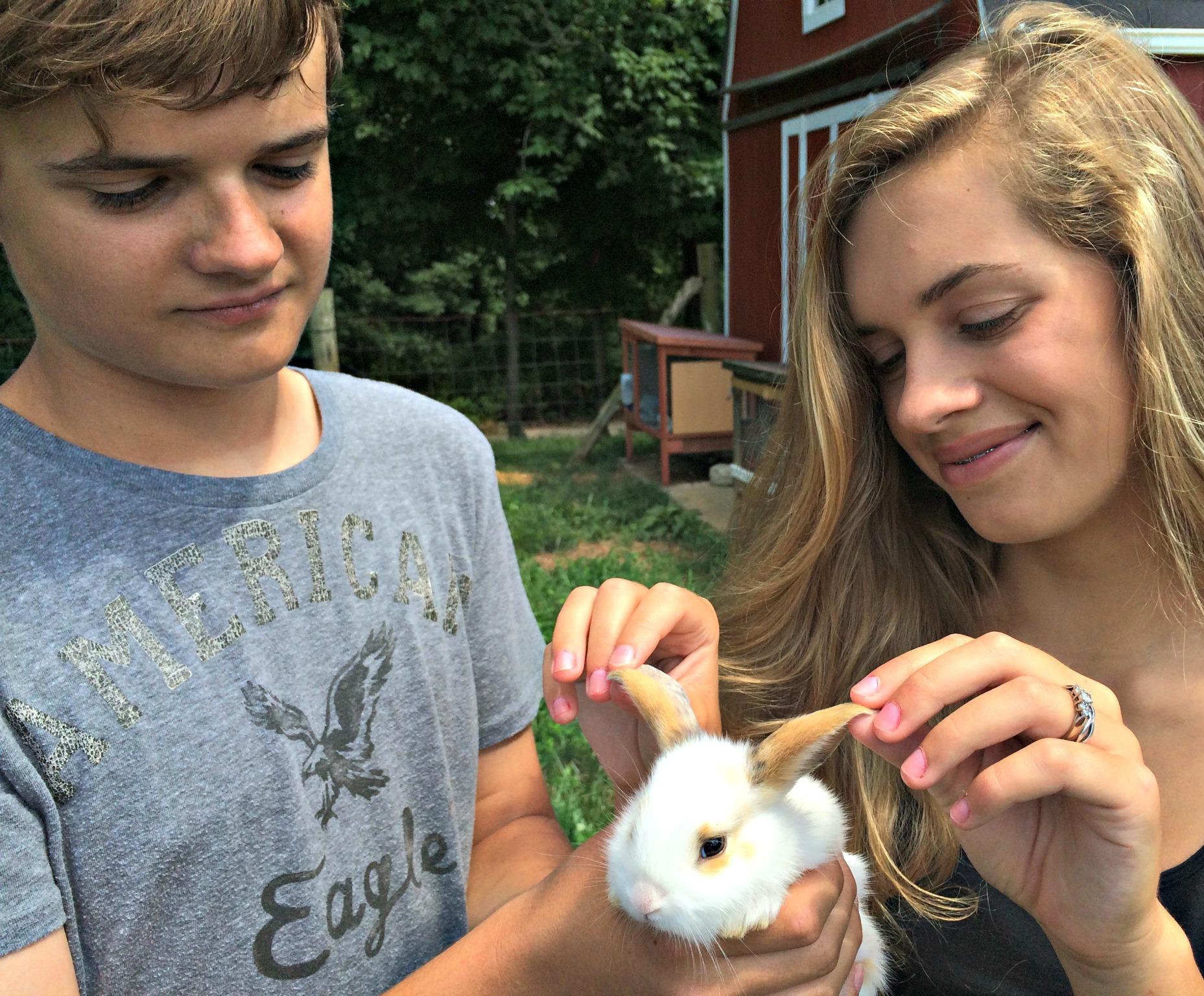 Help- My Rabbit Has Crusty Ears – Farm Fresh For Life – Real