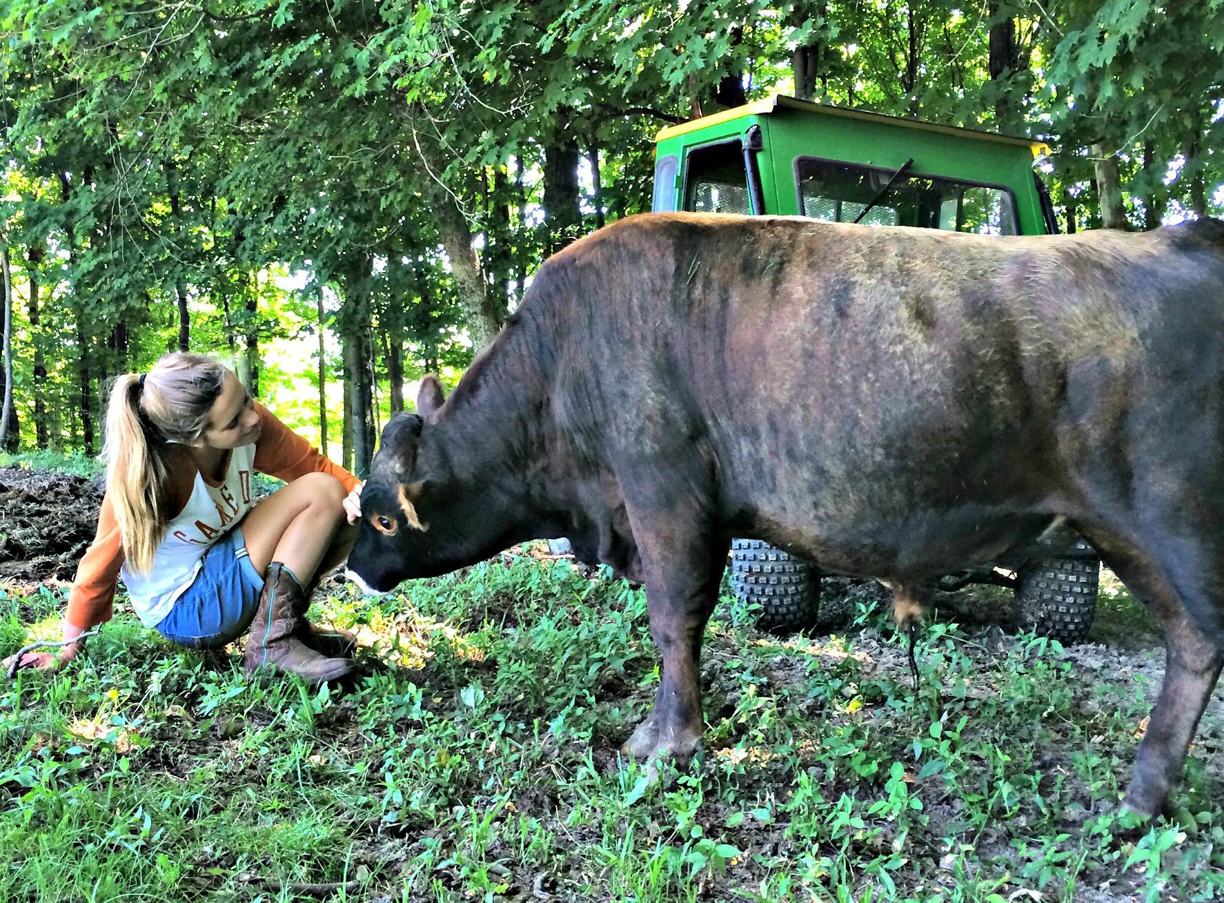 How Do I Stop A Cow From Nursing Farm Fresh For Life