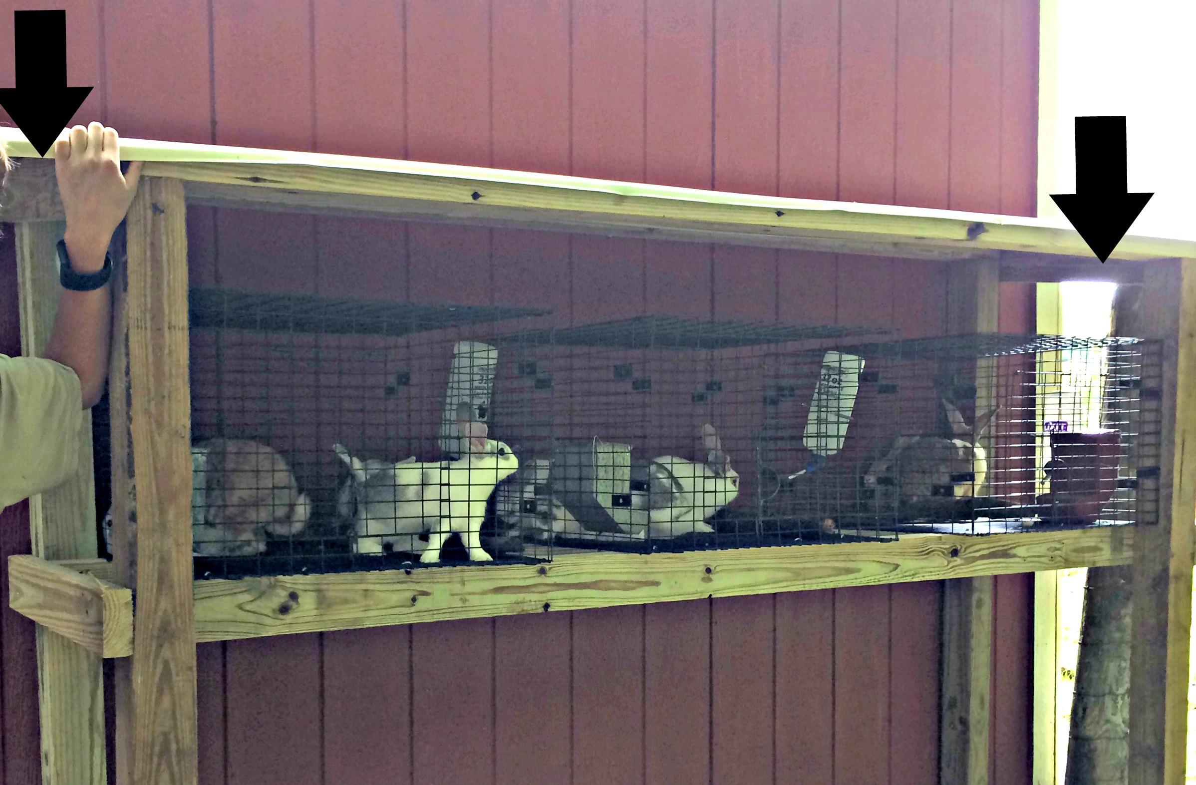 Build a Backyard Rabbit Hutch – Farm Fresh For Life – Real Food ...