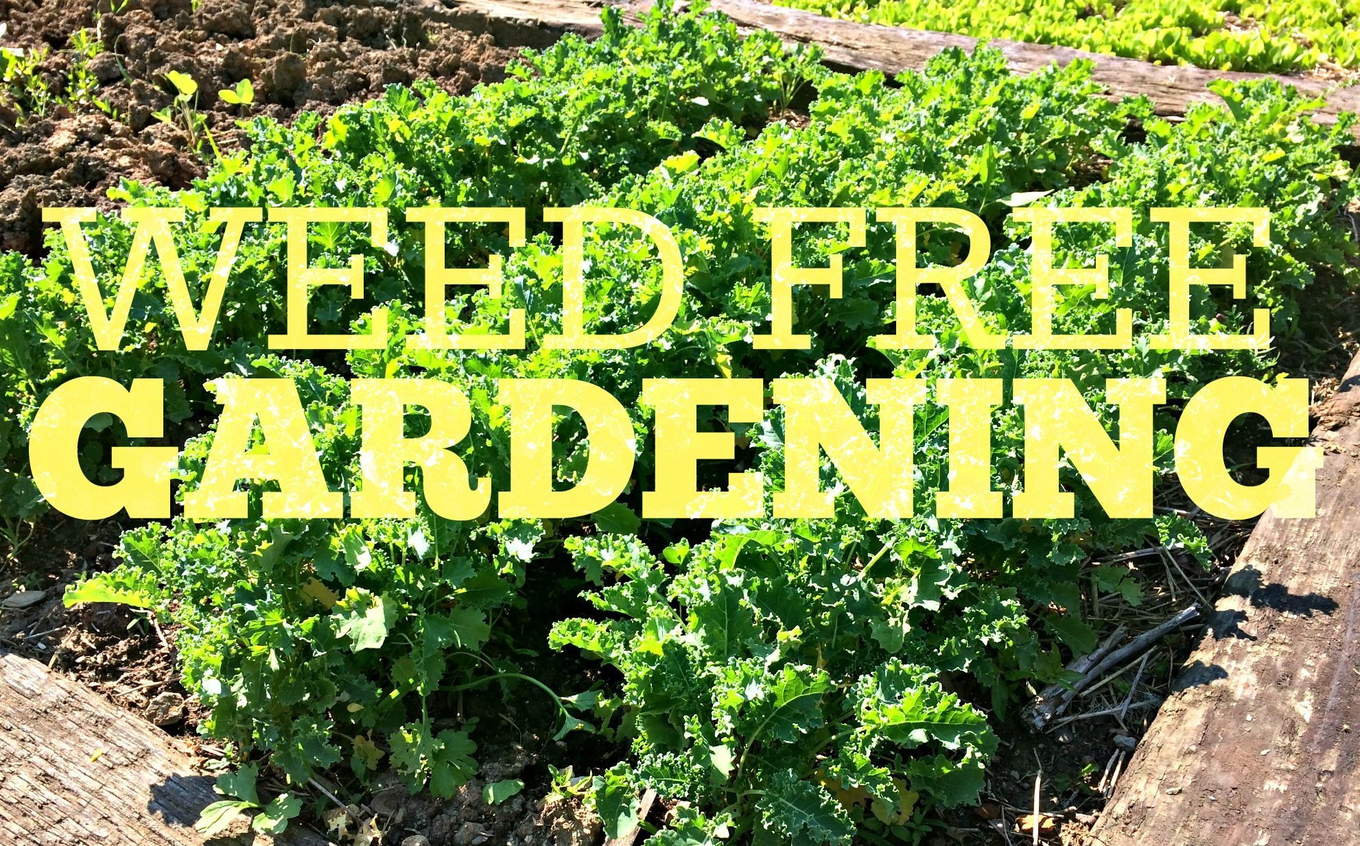 No More Weeds Heres My Secret To Weed Free Gardening