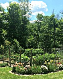 Surprising Benefits from Gardening – It's more than Fresh Produce