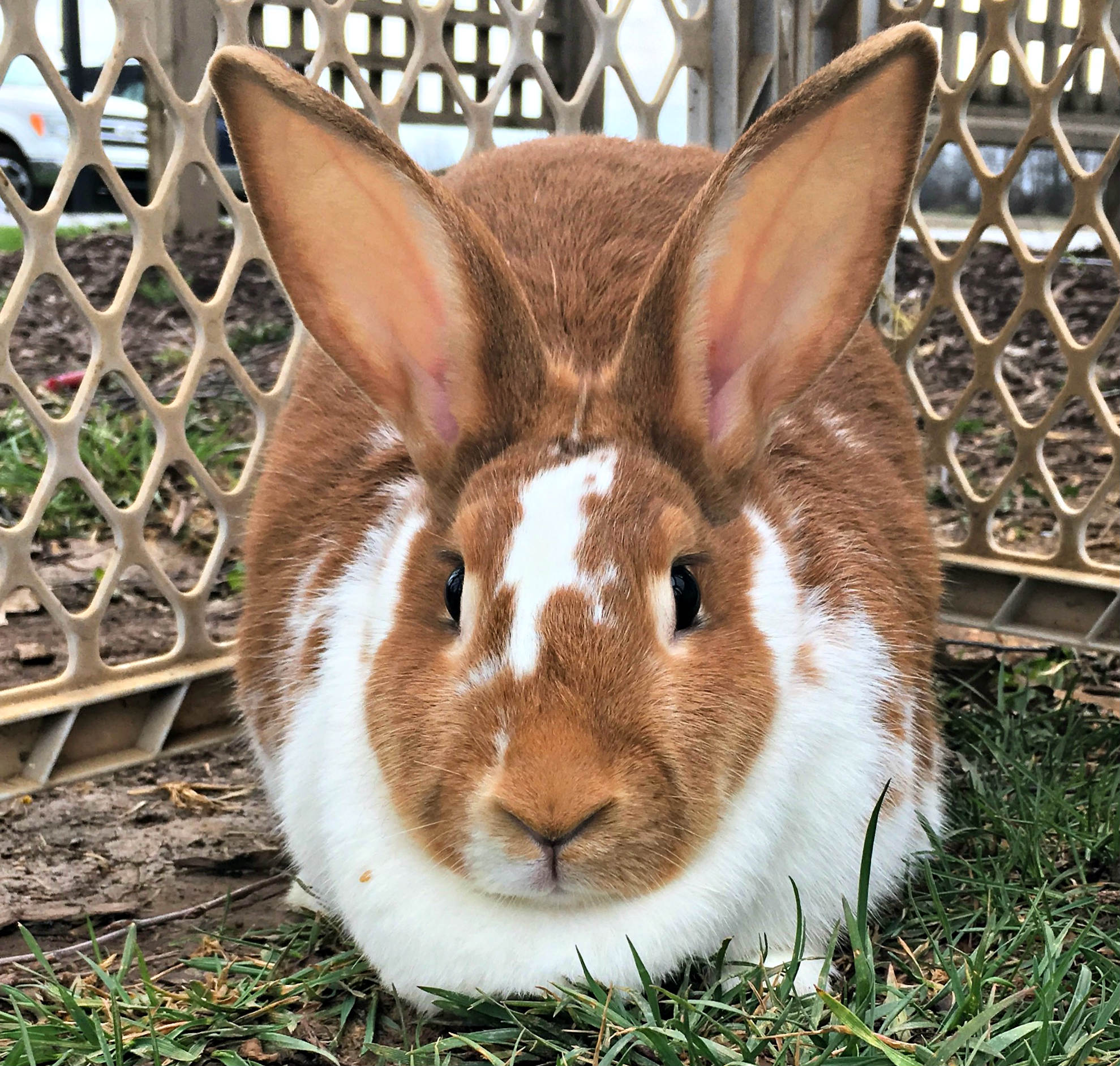 Why do rabbits dream